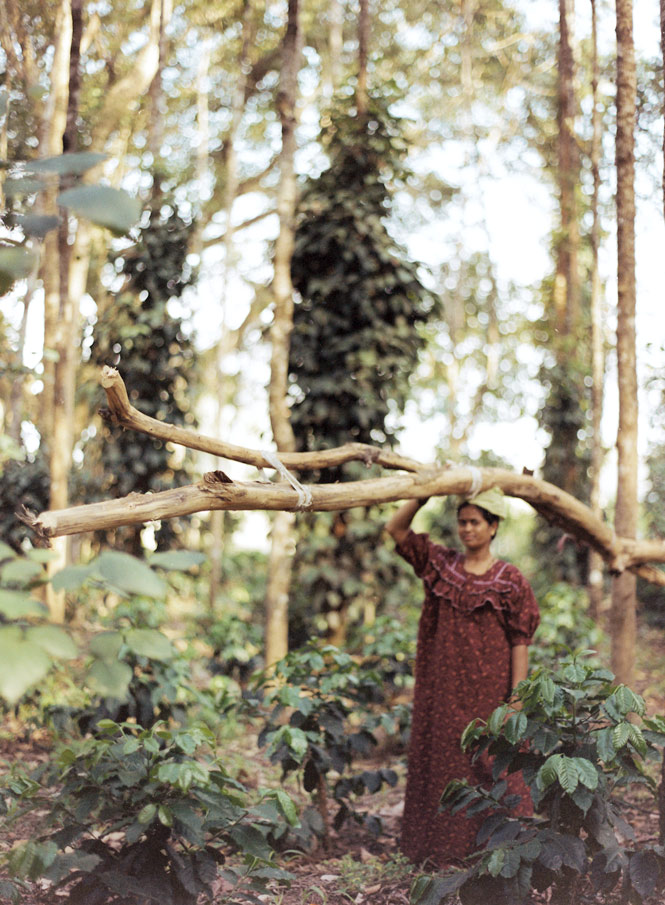 Clearing fallen branches at a coffee estate in the Baba Budan Hills.