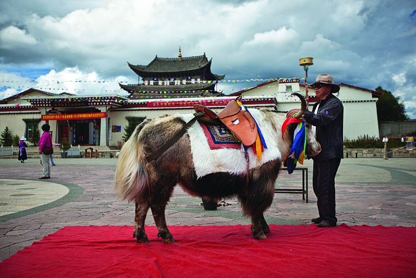Since being designated Shangri-la touts and guides have flocked to Zhongdian to get their share of the tourist's dollars.