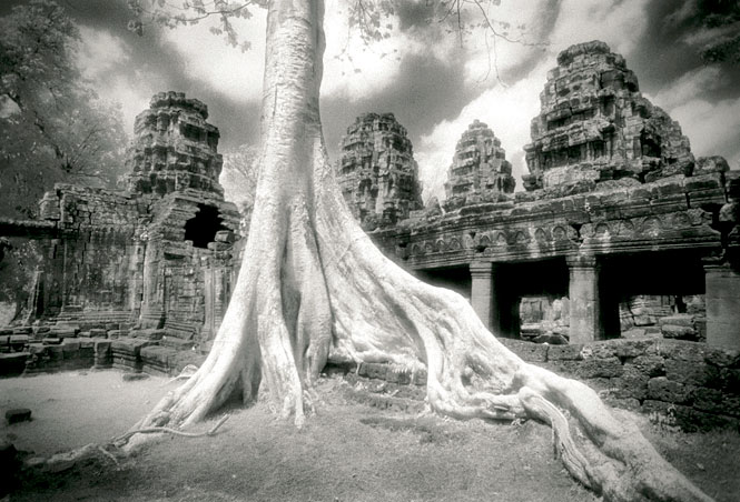 A tree sets down roots among the ruined galleries of Banteay Kdei, a 12th-century Buddhist temple.