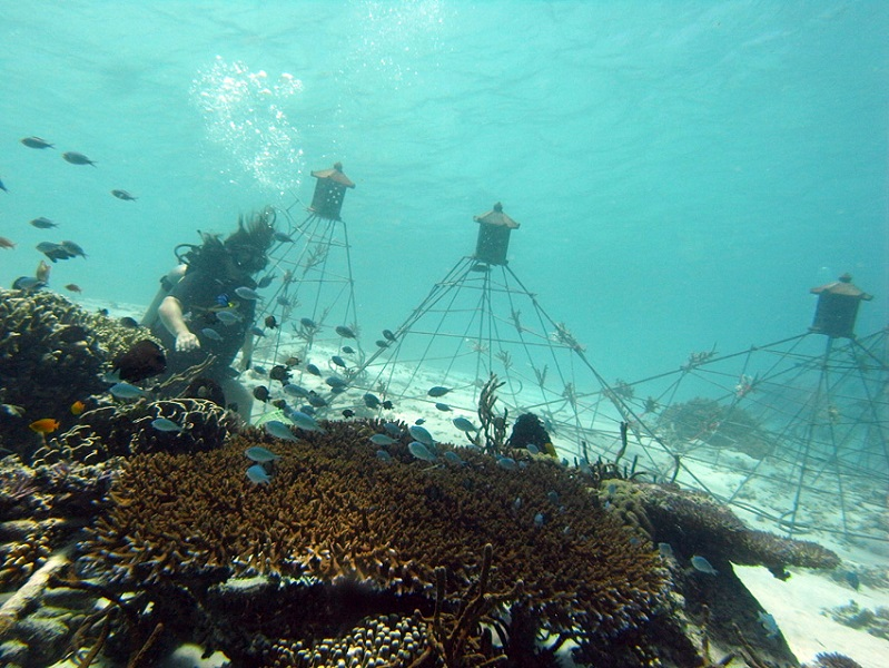 The project uses Biorock technology to stimulate reef growth.