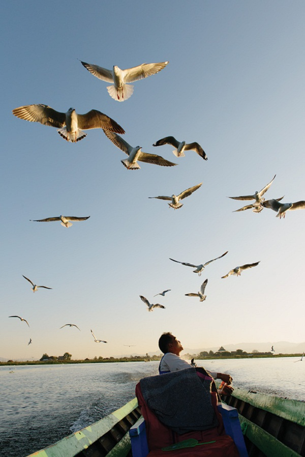 Central Myanmar's cool season brings thousands of wintering seagulls to Inle Lake.