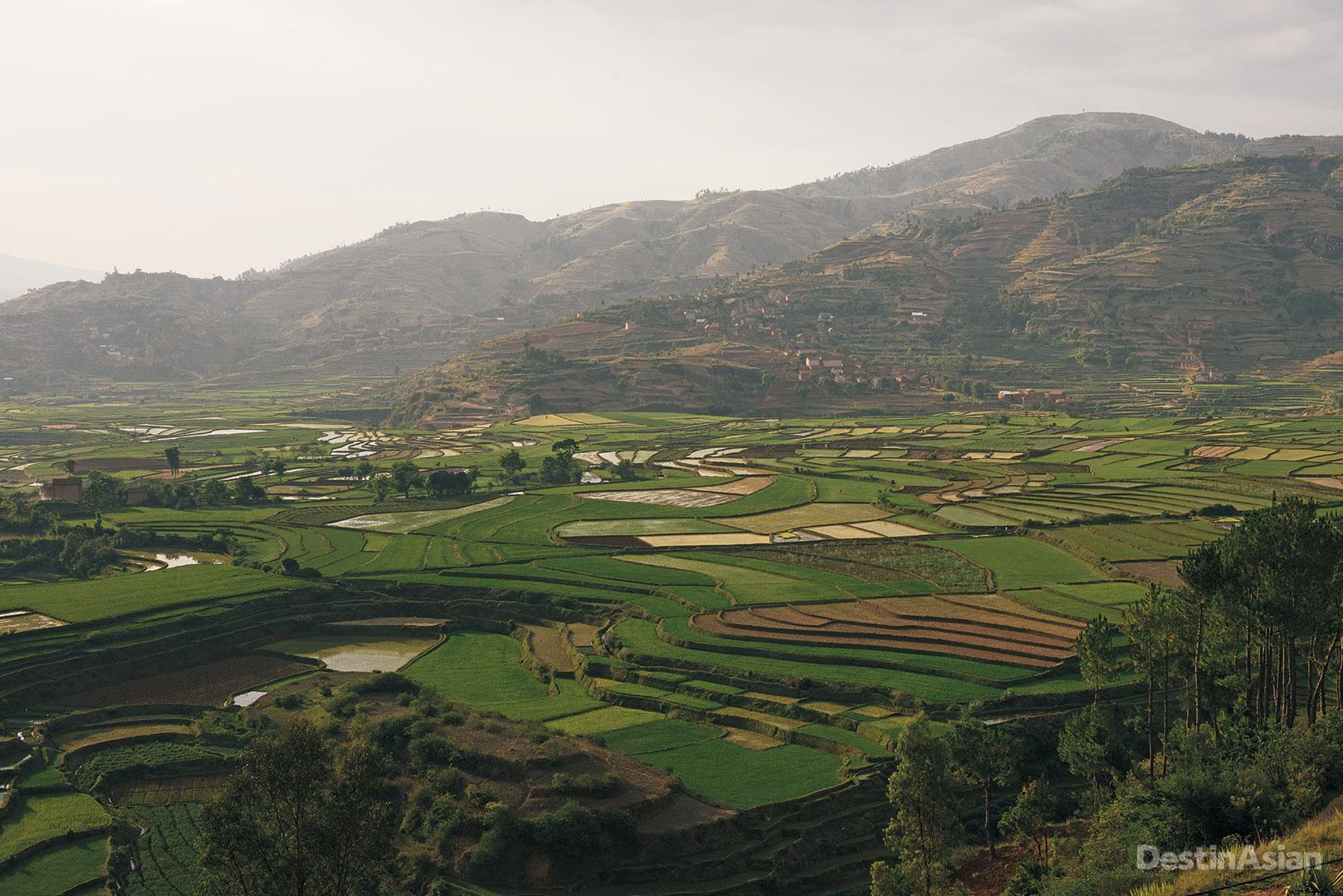 Rice terraces outside Anatananarivo.