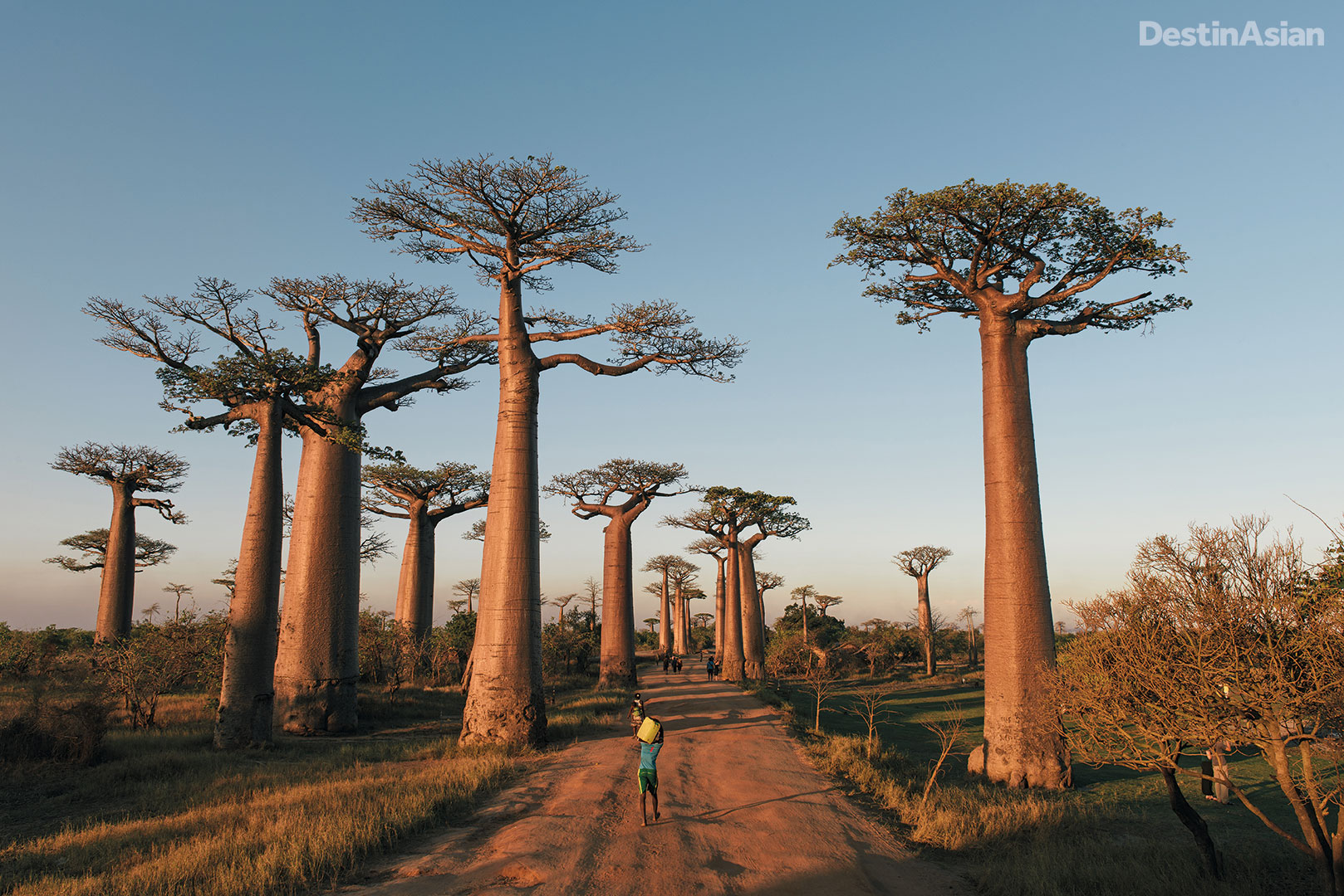 The Avenue of the Baobabs is one of Madagascar's most memorable sights.