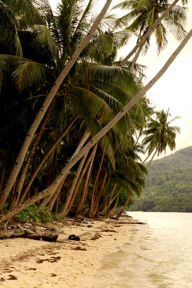 A palm-fringed beach on the uninhabited island of Setaih.