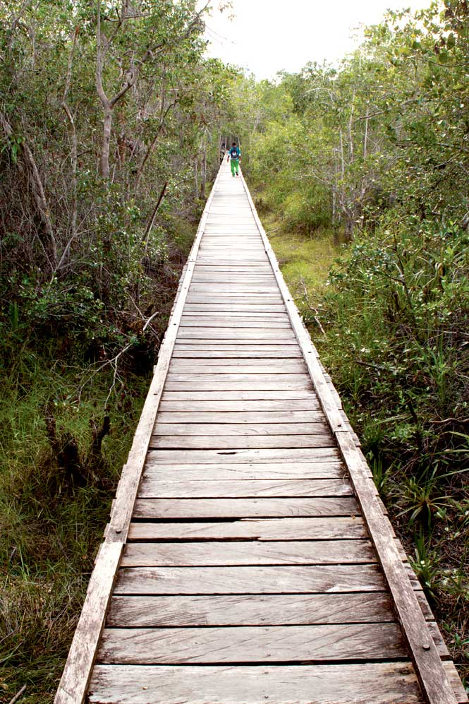 On the boardwalk at Camp Leakey, founded in 1971 for the study and preservation of the orangutan.