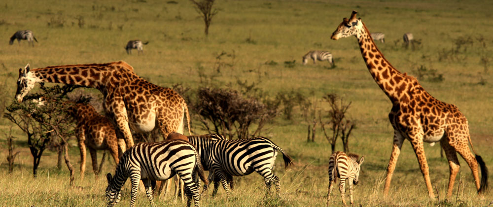 Mahali Mzuri is Sir Richard Branson's Kenyan Safari Camp.