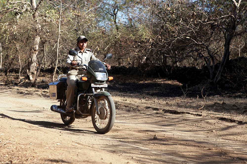 One of the Gir Forest National Park's female rangers out on patrol.