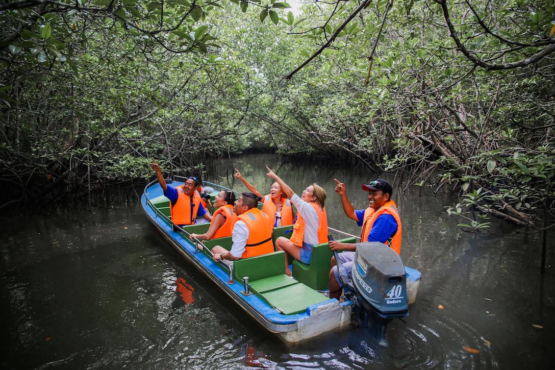 Mangrove discovery tour