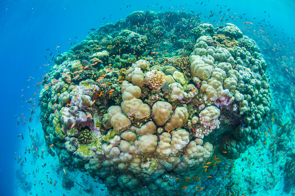 Large coral reef is found in The Blue Hole.