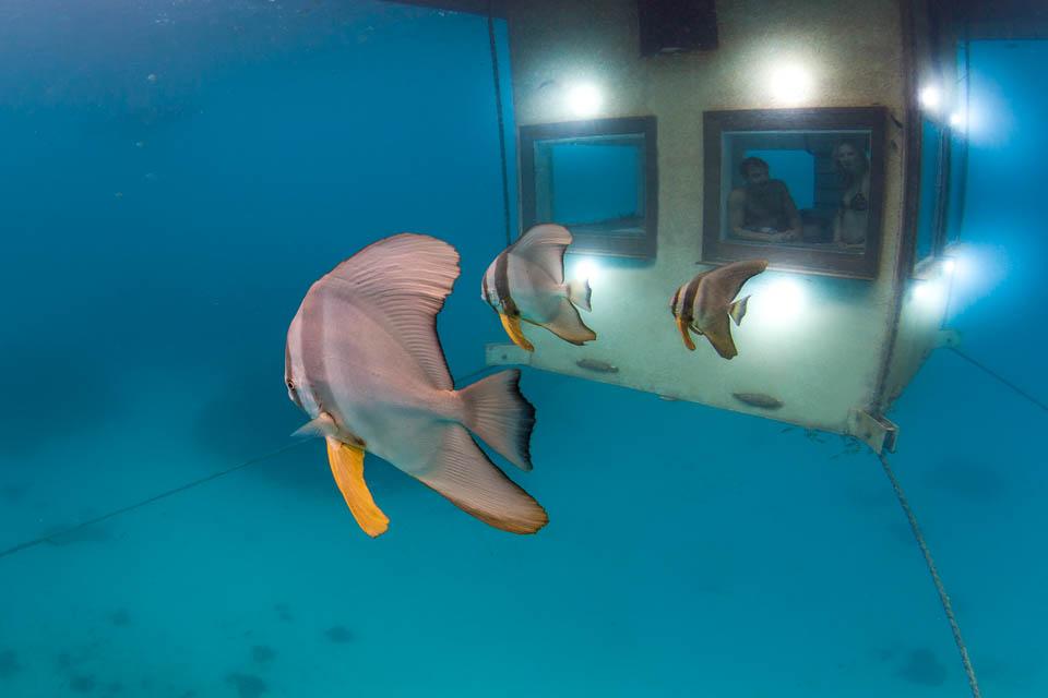 Fish swimming past The Underwater Room.