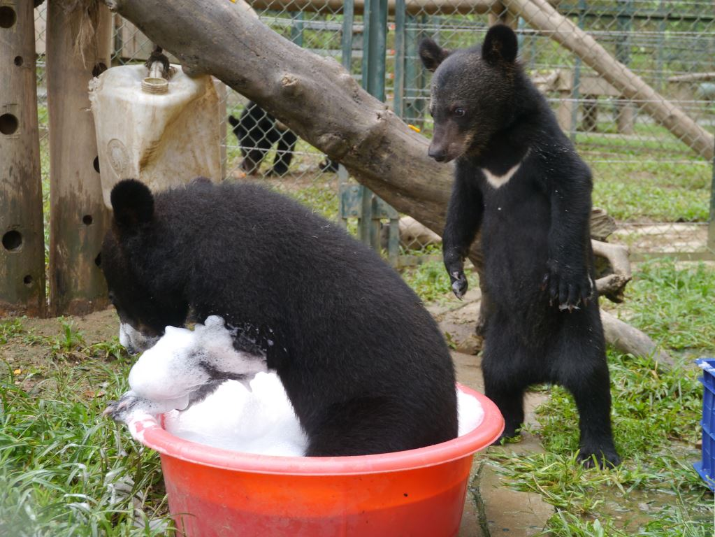 Bears Misty and Rain play in a bubble bath.