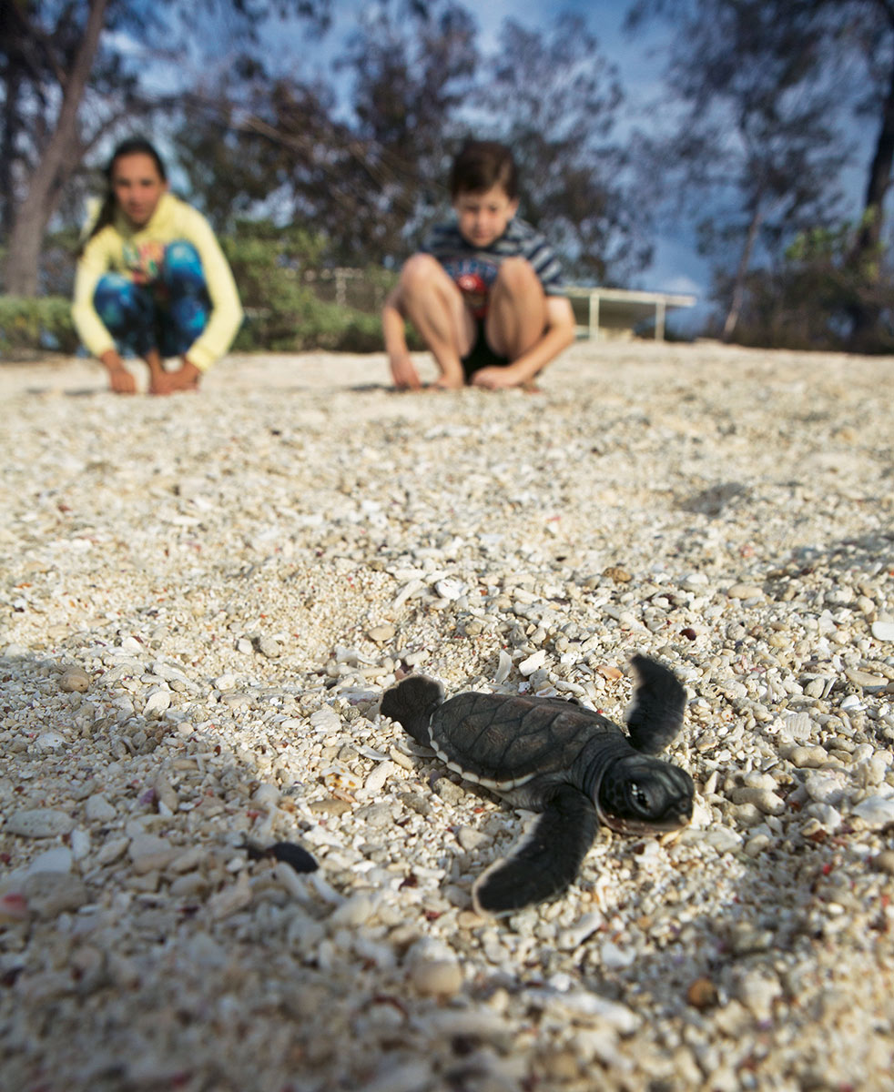Come the hatching season, guests can watch baby green sea turtles take their first steps toward the ocean.