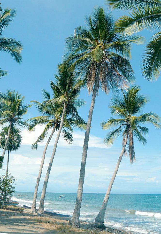 Palm trees tower over a beach near Vila.