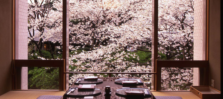 Cherry blossoms abound.