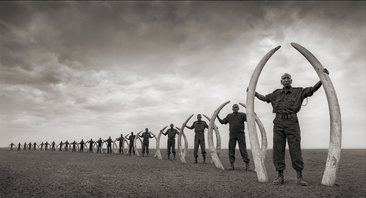 Big Life rangers holding the tucks of elephants killed by poachers within the Amboseli/Tsavo ecosystem between 2004-2009.