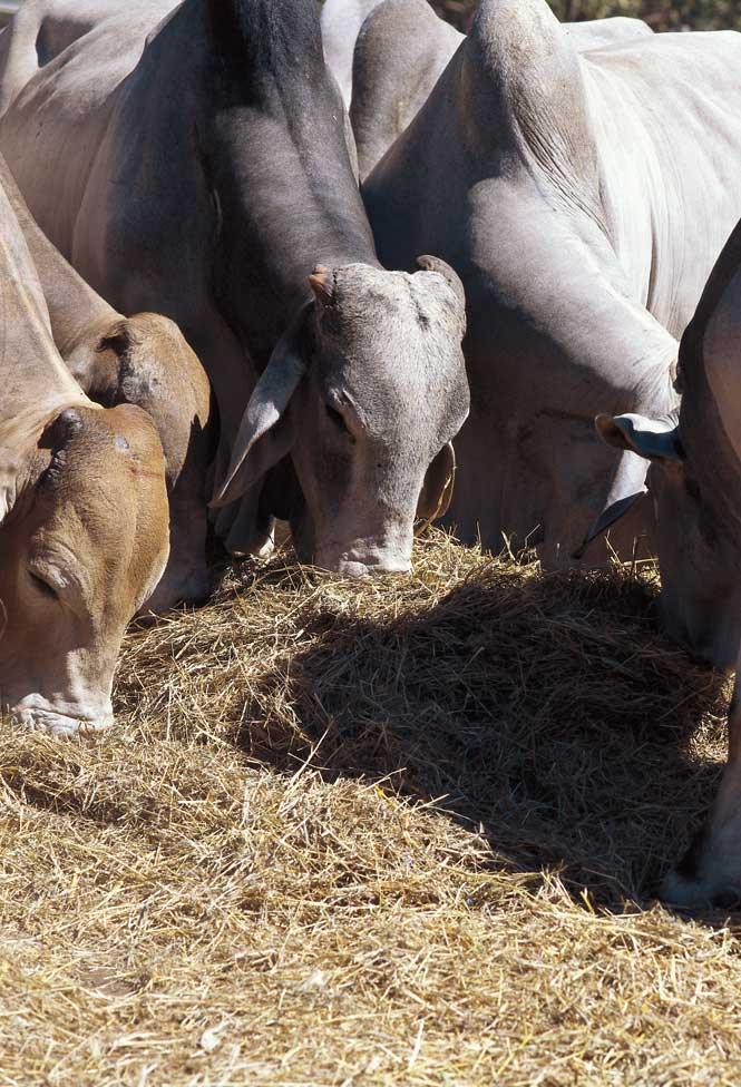 Feeding time at a Bullo paddock.