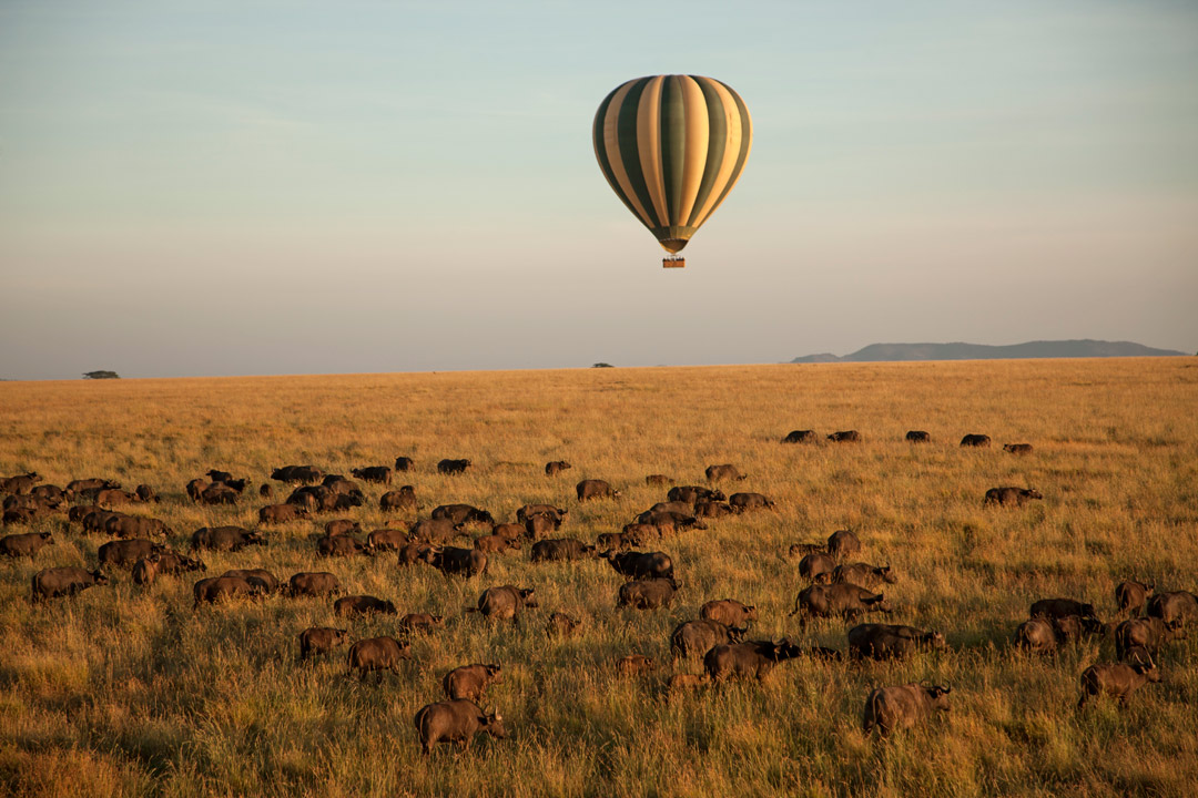 Floating in a hot air balloon over the Serengeti.