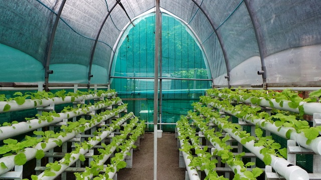 A greenhouse from Shangri-La Maldives' farmer's cooperatives.