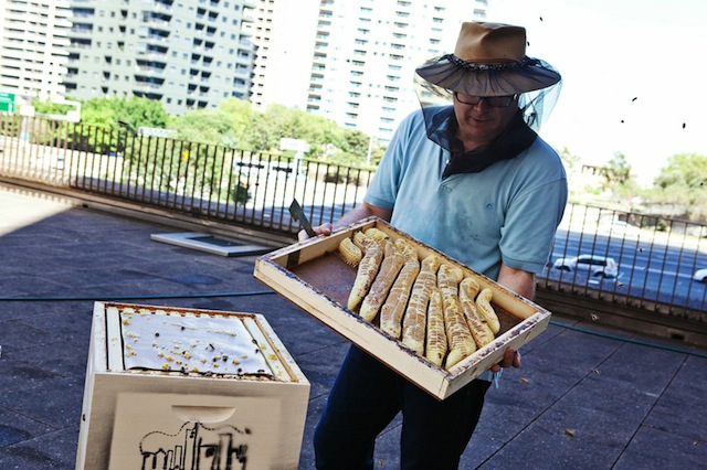 The Shangri-La Hotel, Sydney harvests its own honey in urban beehives on the hotel's roof.