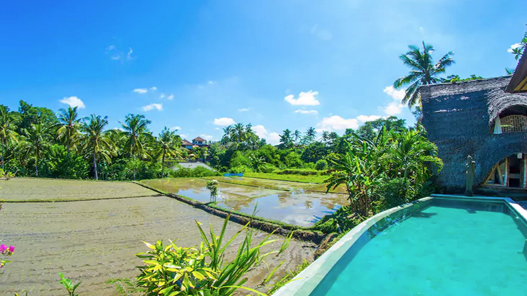 Direct view from the room of the private pool and rice paddies.