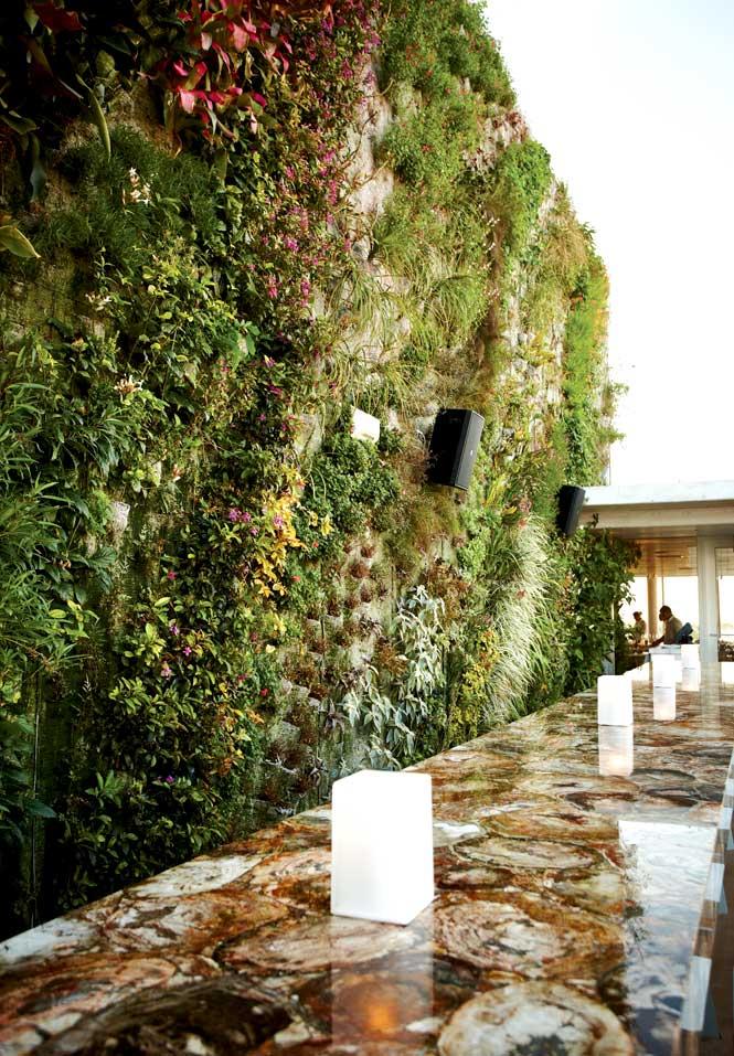 Juvia's vertical garden.