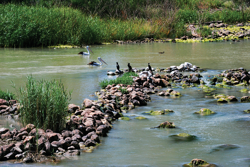 Pelicans are said to have inspired the fish traps' design.