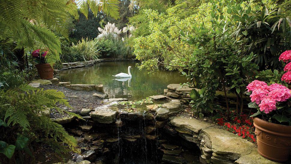 The Hotel Bel-Air's swan lake.