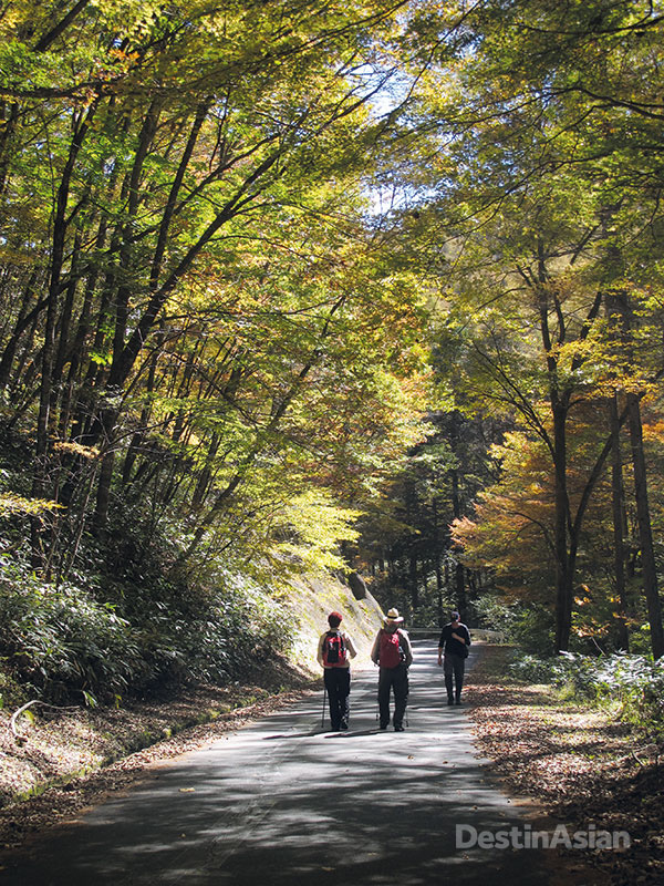 Day seven of the tour sees guests walking an original section of the Nakasendo between the towns of Nagiso and Nojiri, which includes an ascent of the forested Nenoue Highlands.
