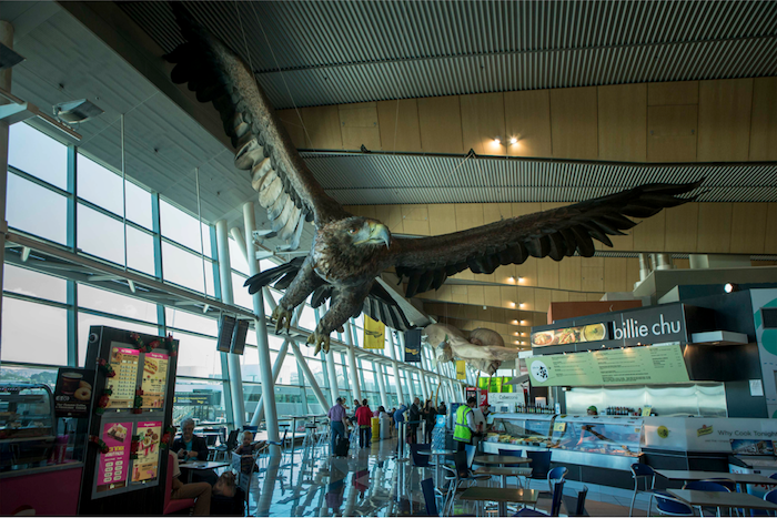 The second eagle in Wellington Airport.
