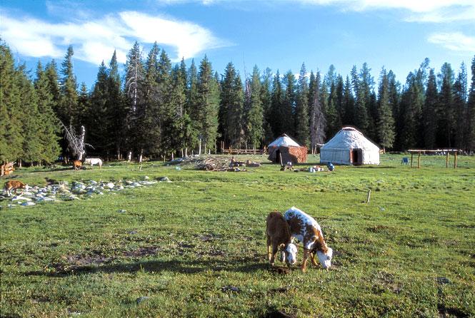 Tuwa pastureland.