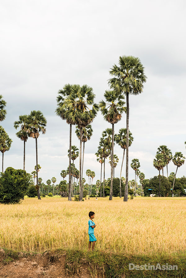 Rice fields in the village of Andong Russei, a short tuk-tuk ride inland from Kampong Chhnang.