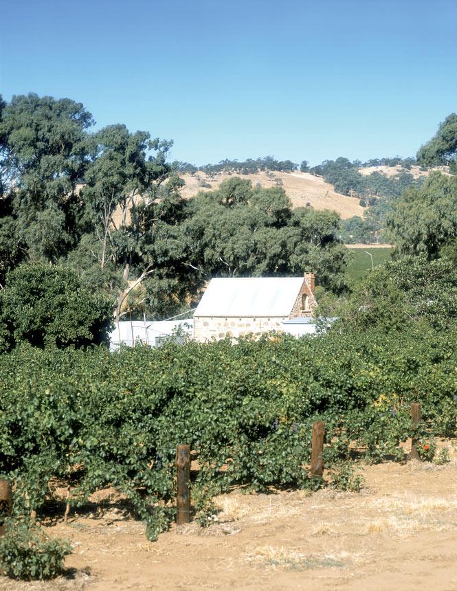 Silesian settlers' huts dot vineyards across the Barossa.