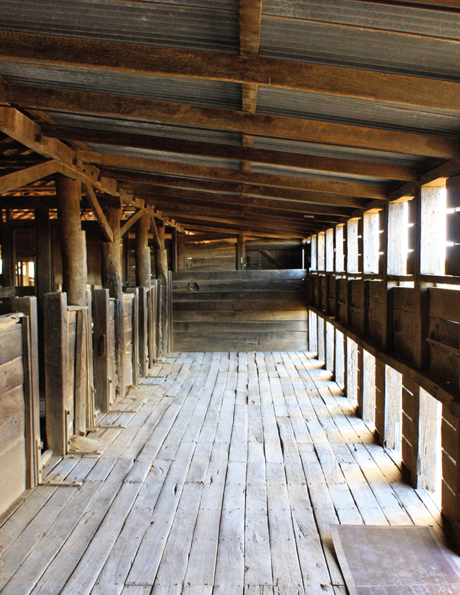 Inside a historic shearers' shed at mungo national park