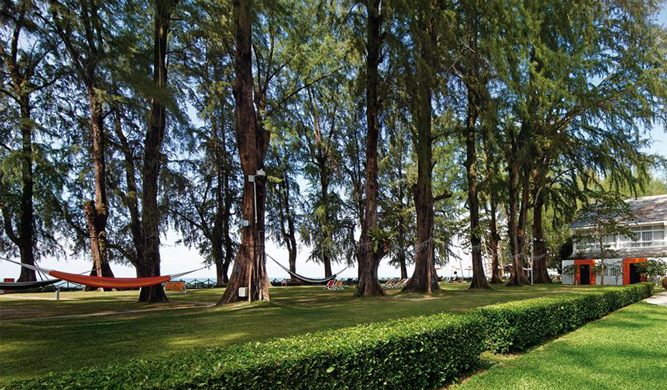 Stars of the show: the casuarina trees on beachfront lawn.