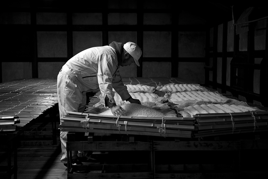 Koji (rice cultured with mold spores, a crucial ingredient in sake brewing) being spread out to dry at the Chusuhingura brewery in Hyogo prefecture.