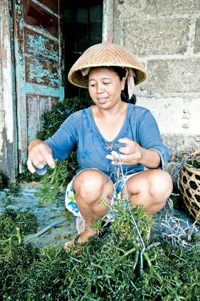 Seaweed farming is the mainstay of Nusa Ceningan's economy.
