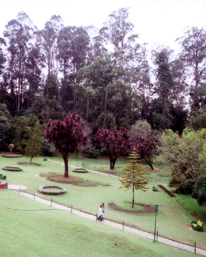 Ooty's historic Botanical Garden sprawls over 22 hectares and is home to more than 1,000 species of plants.