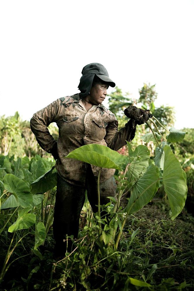 A Palauan woman tending her taro patch.