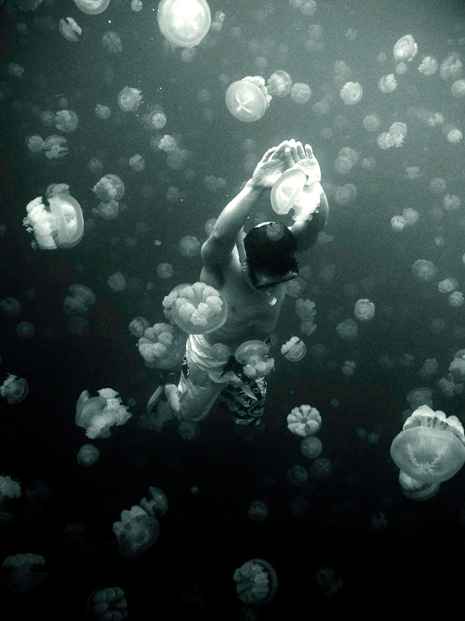 Swimming with the inhabitants of Jellyfish Lake in the Rock Islands.