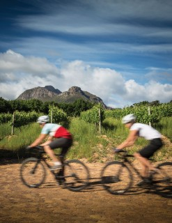 Cycling Cape Town's Vineyards