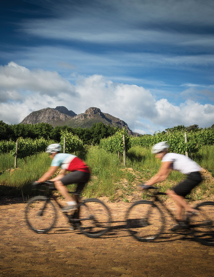 Cycling Cape Town's vineyards.
