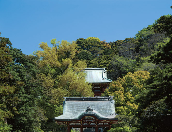 Hillside pavilions at Tsurugaoka Hachiman-gu, one of dozens of Shinto shrines in Kamakura