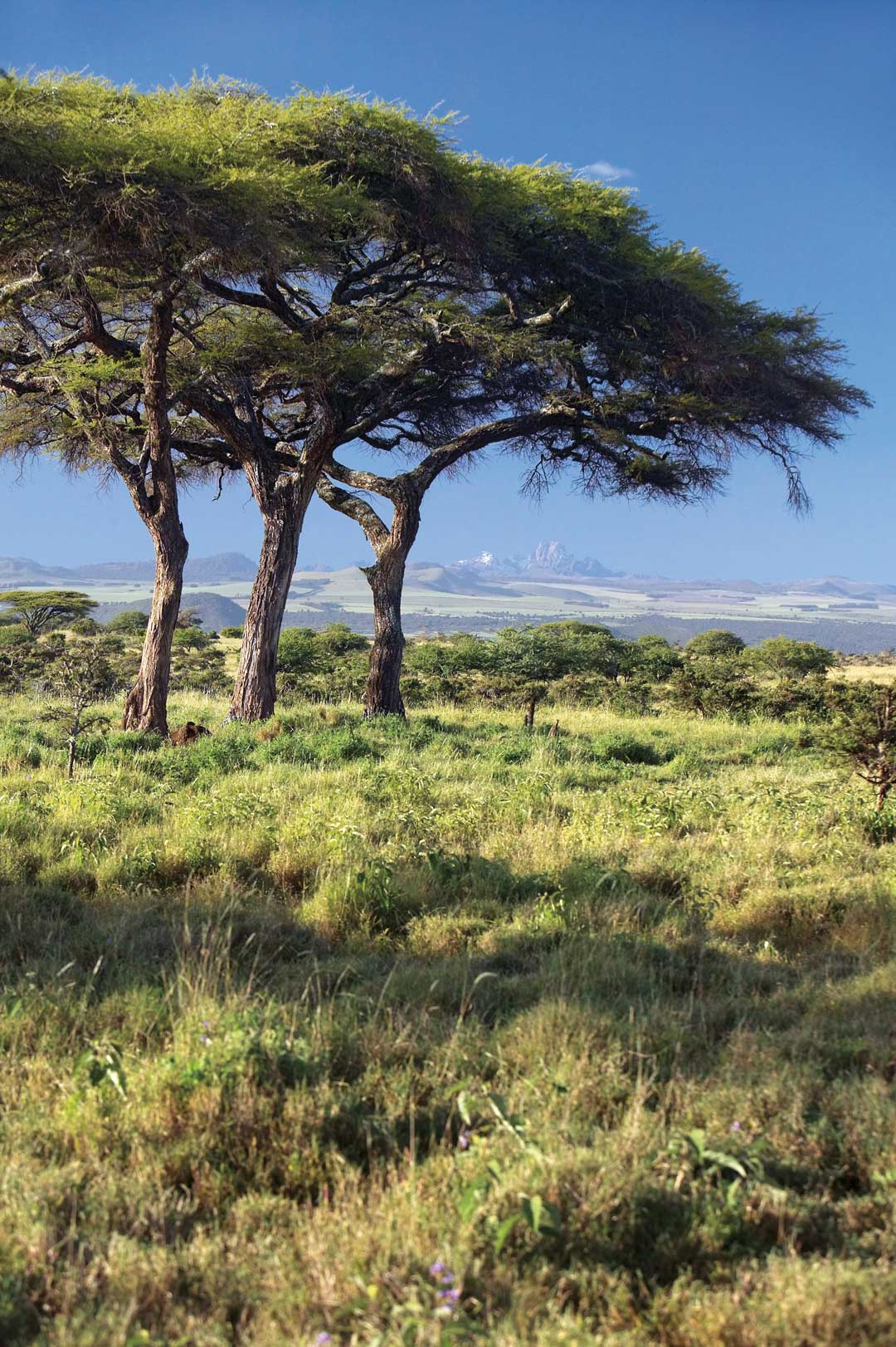 A view across the grasslands of Lewa Conservancy to the rugged peaks of Mount Kenya.