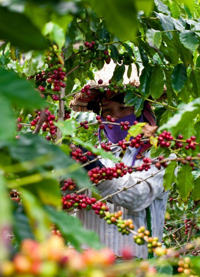 Oriberry Coffee sources its beans directly from farmers.