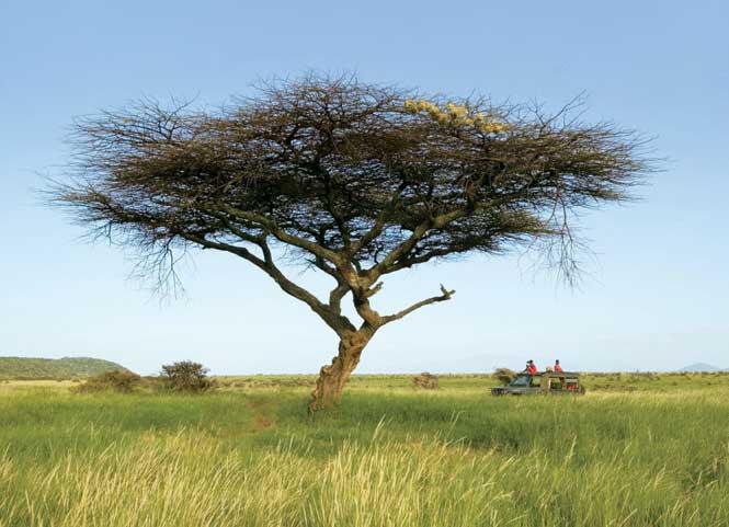 Above: On safari in Kenya's Lewa Wildlife Conservancy.
