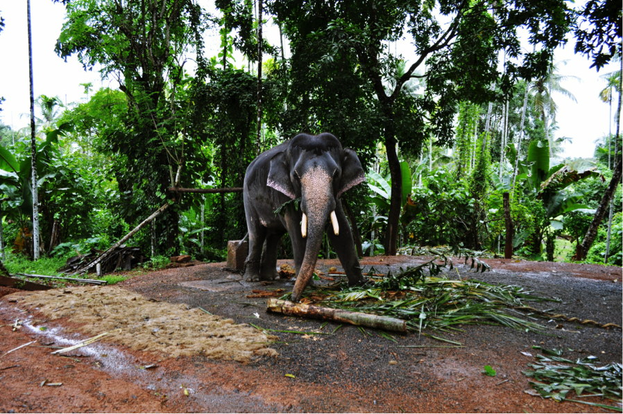 Bhat believes in authentic travel experiences, like spending a day with a Hindu temple elephant.