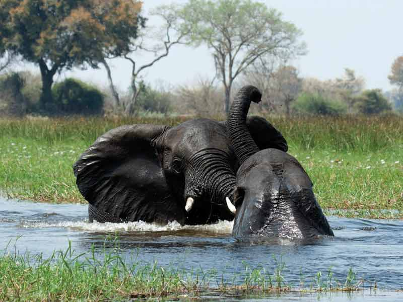 The annual flooding of Botswana's Okavango River occurs during the dry season, resulting in unique biological cycles for the native plants and animals.