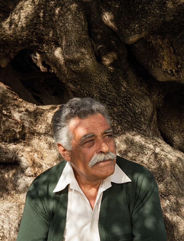 Olive-oil maker Manolis Vassilakis at his family's olive grove, sitting against the base of a tree that he says is 1,000 years old.