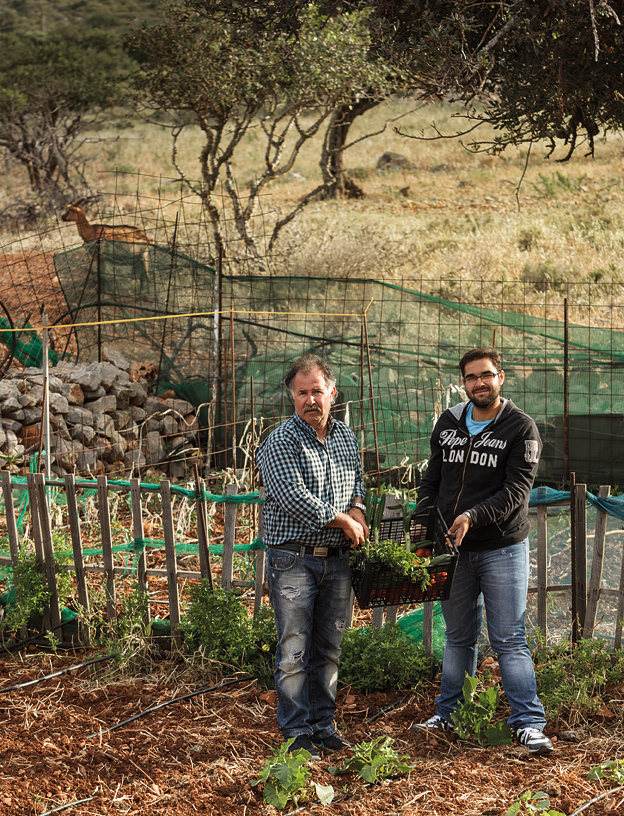 Delphini restaurant owner Giorgos Mathaiakis and his son Kostas gathering vegetables at their family farm near Plaka.